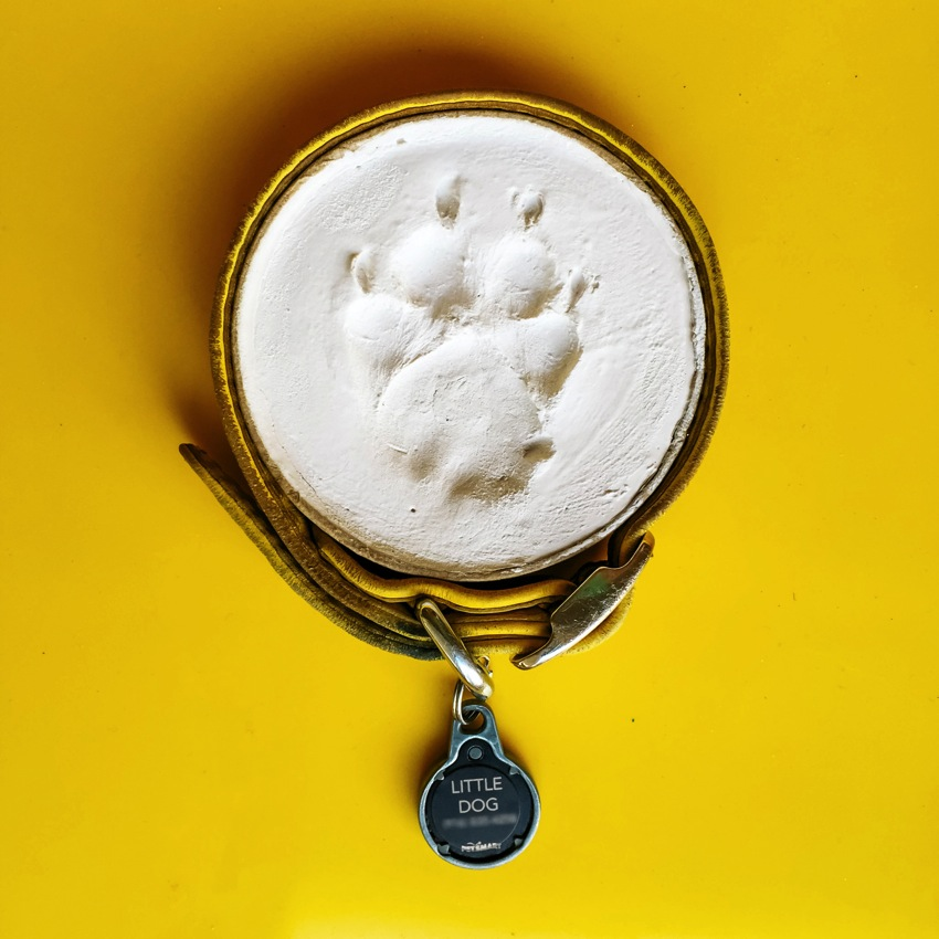 Little Dog Paw Print 001