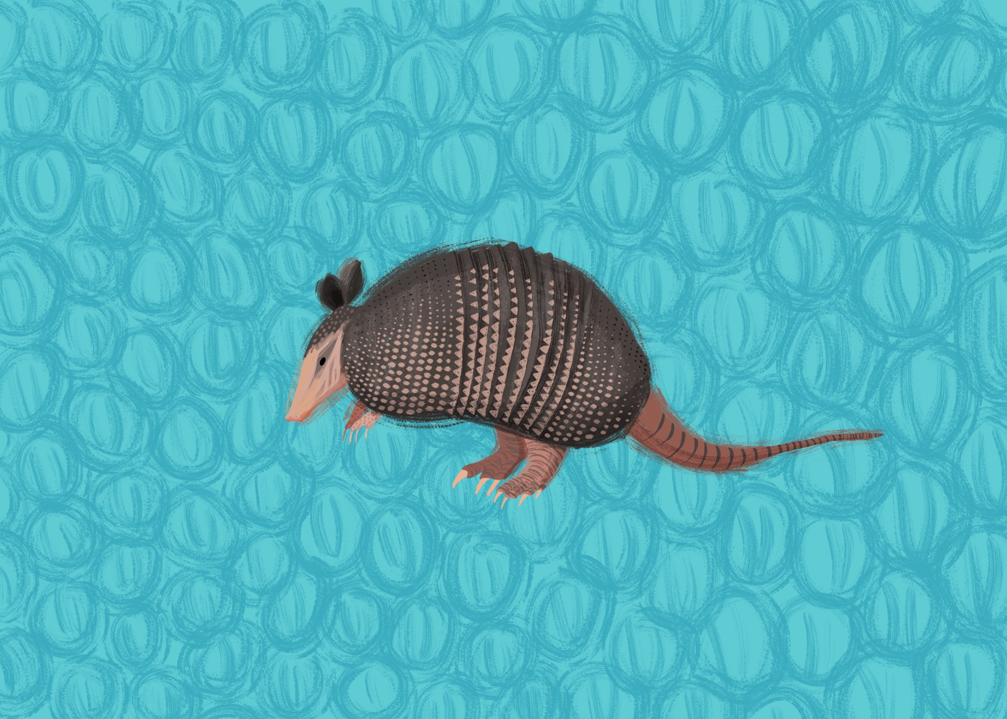 Armadillo by Lisa Bardot